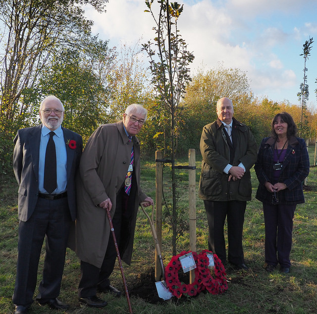 English Oak trees commemorate fallen of First World War